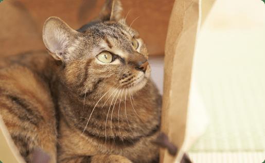 猫ちゃんイメージ1